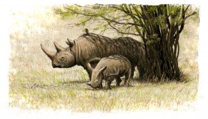 Mother Rhino and infant