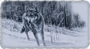 wolf5_Fotor