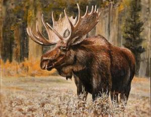 Moose - Sept 2019